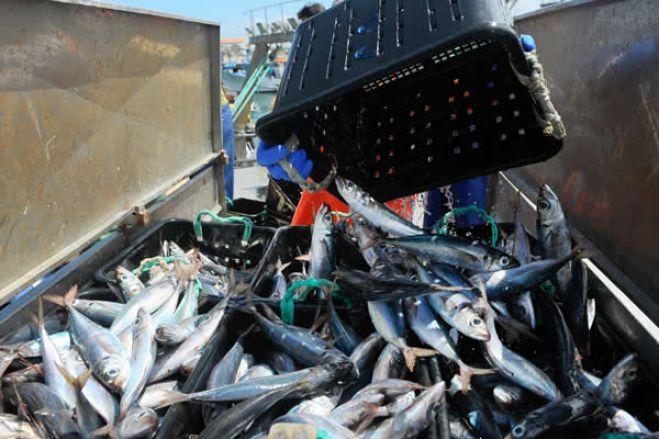 Autoridades angolanas apreendem navio russo com mais de 1.200 toneladas de pescado