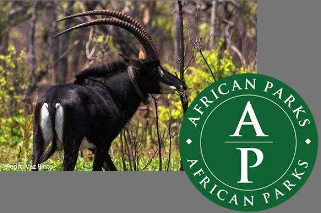 Angola negoceia com a African Parks a cogestão de parques naturais no sudeste do país