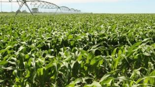 Quatro empresas angolanas do setor agrícola em risco